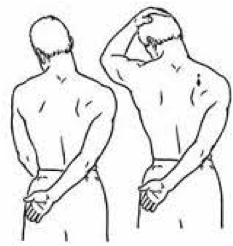 lev-scap-stretch